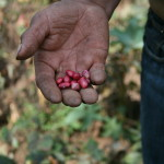 Honduras, 2011